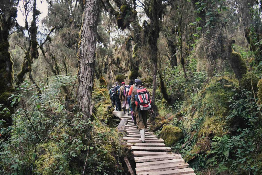Rwenzori Mountains  National Park, Pearl of Africa