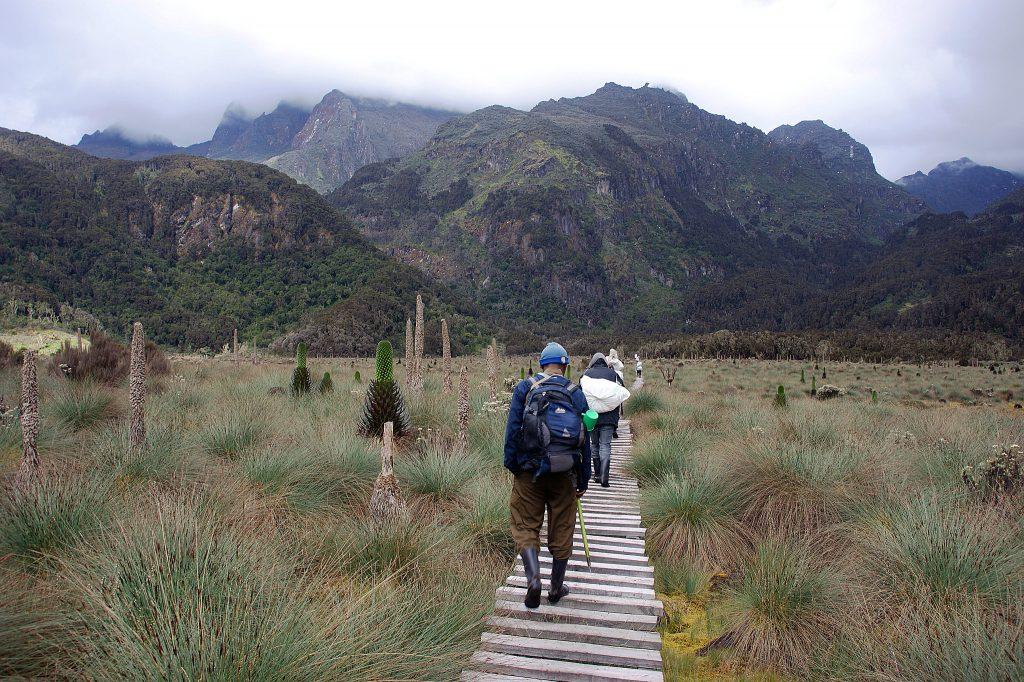 Rwenzori Mountains Uganda