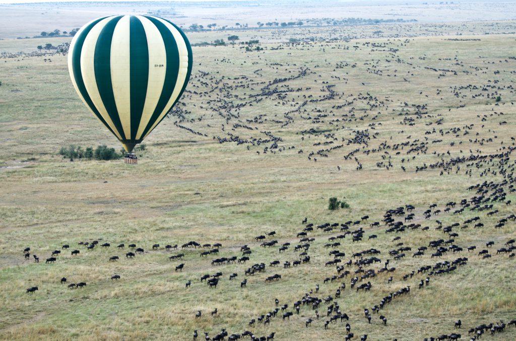 Great Wildlife Migration balloon safari