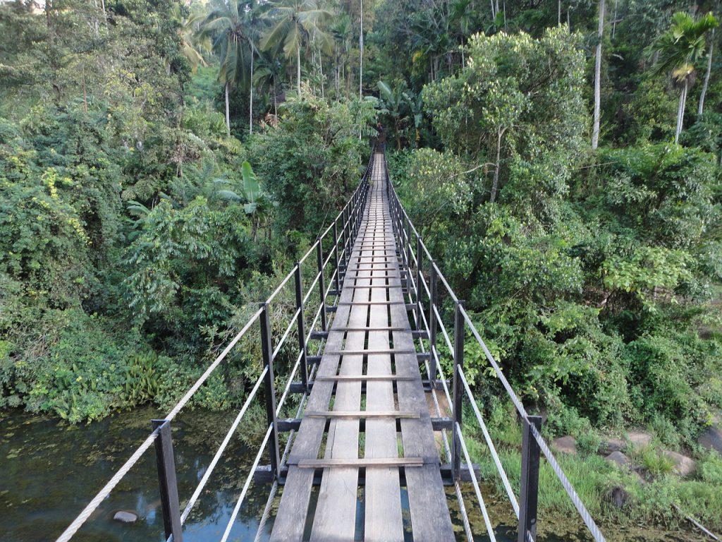 An old bridge and rainforest in Sri Lanka