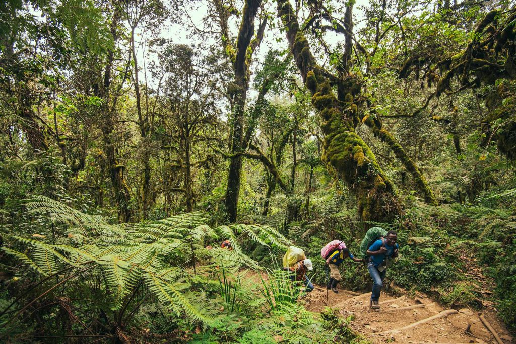 forest hiking Mount Kilimanjaro