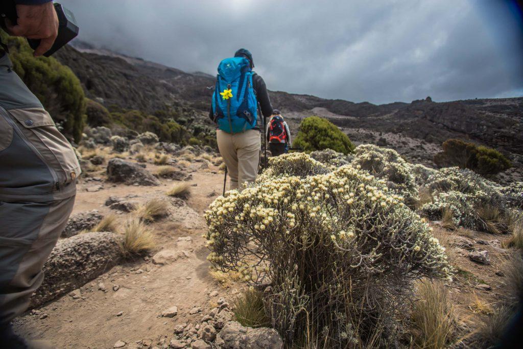 Climbing Mount Kilimanjaro on the Kilimanjaro Umbwe Route