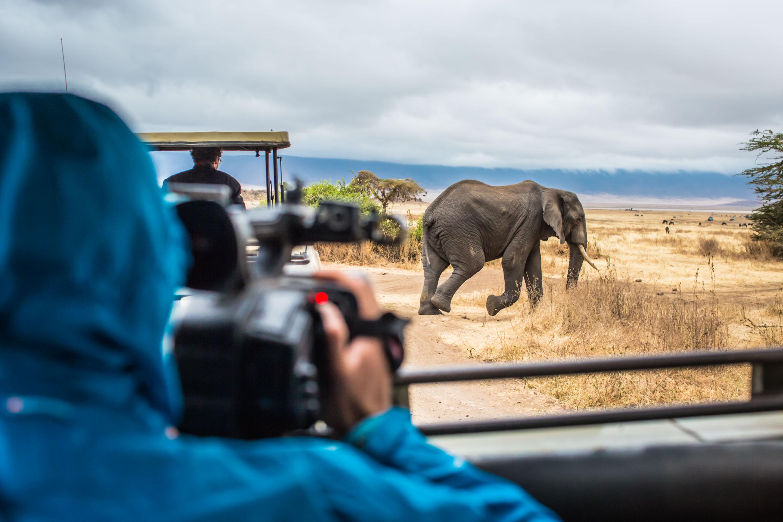 Keep your eyes peeled for elephants in Tarangire National Park