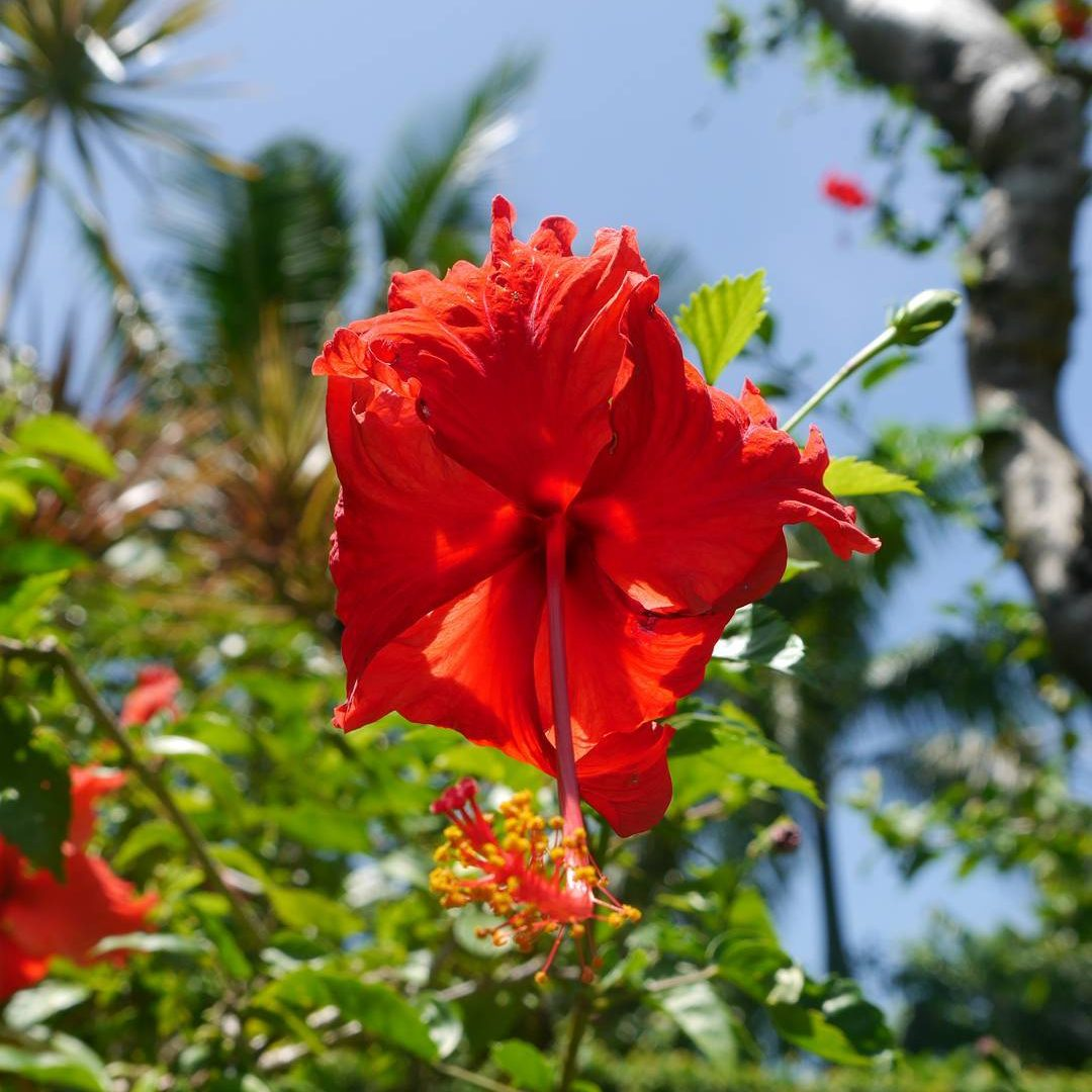 Beautiful flower in Bali