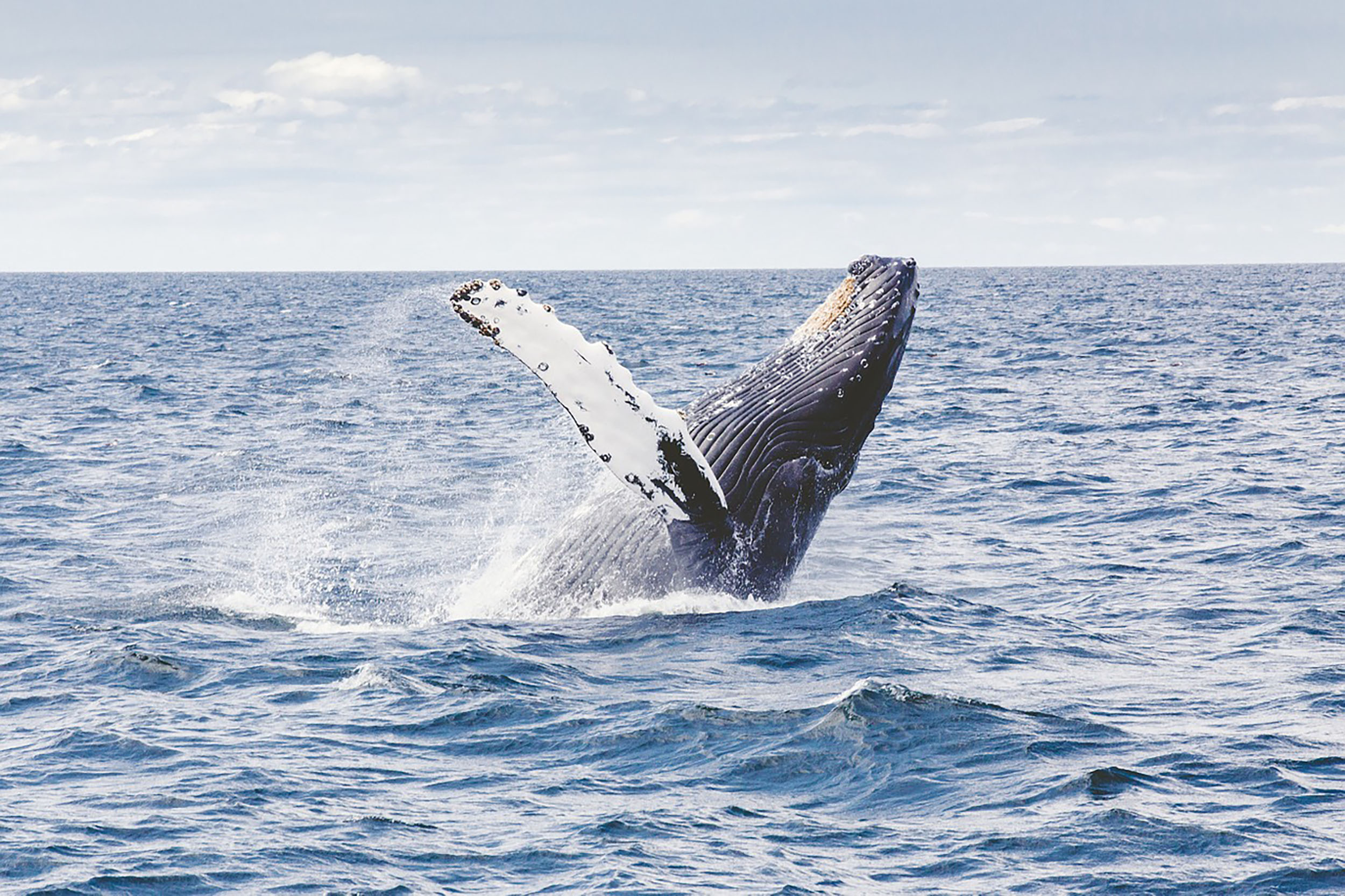Go whale watching in the Indian Ocean
