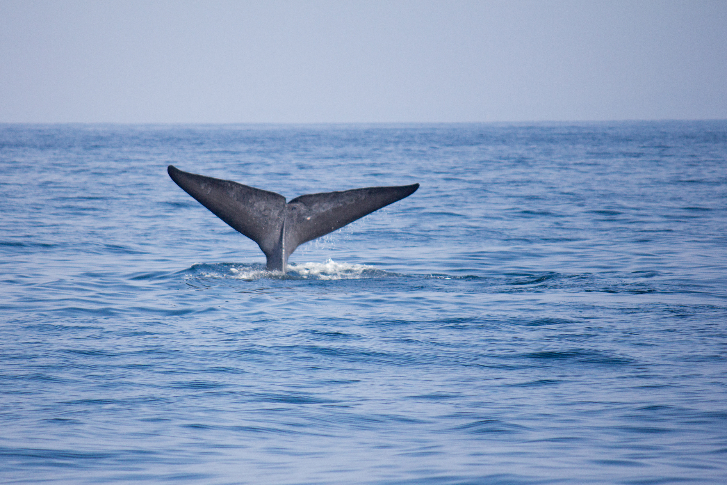 Spotting whales in Mirissa, Sri Lanka