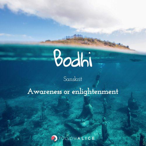 Follow Alice travel quotes - Bodhi