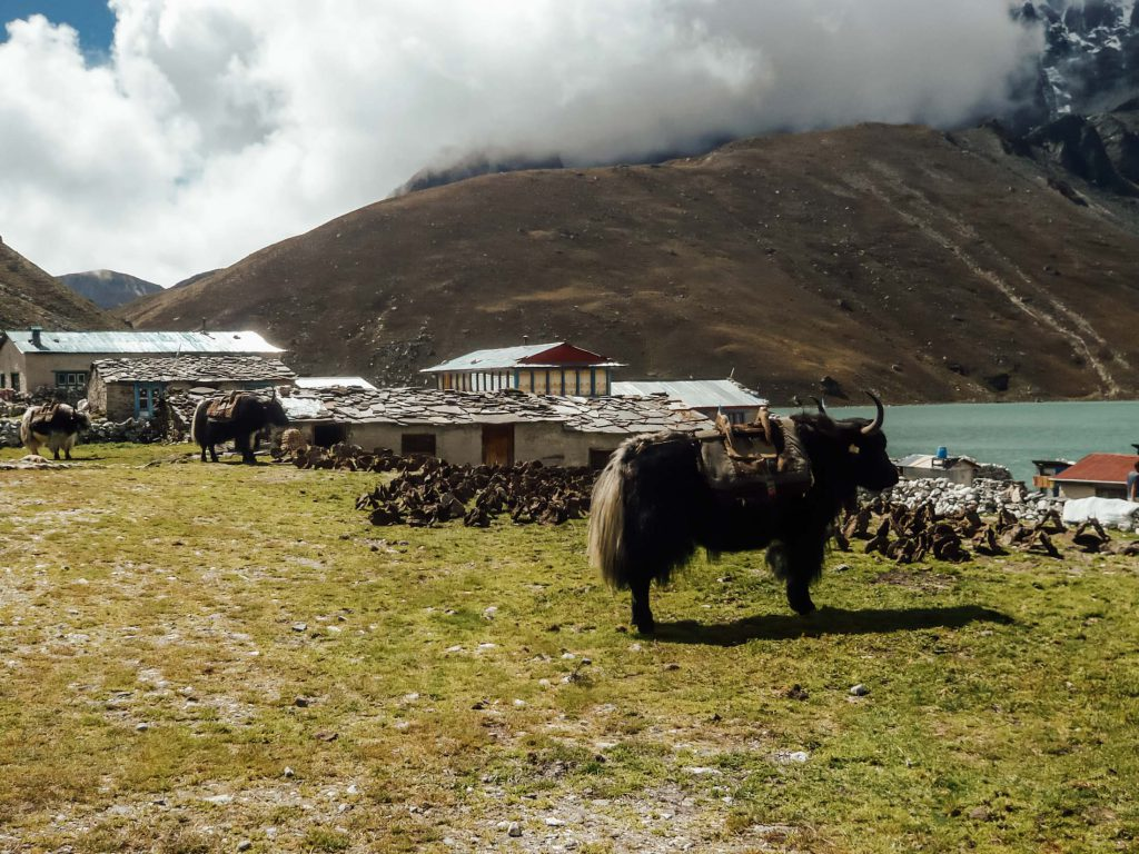 Yak near a lake on the Everest Base Camp trek
