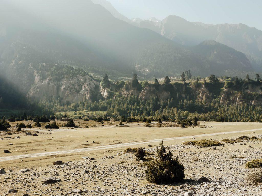 Forest along the Annapurna circuit trek