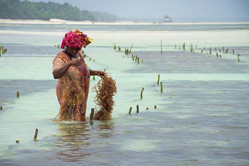 Lady fishing in ocean in Zanzibar
